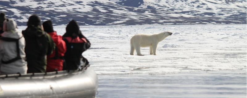 polar bear zodiac cruise
