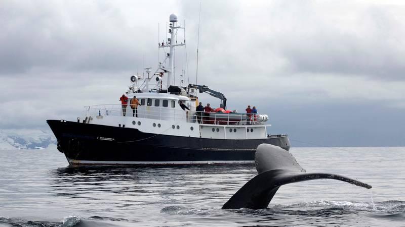 Whale fluke, Hans Hansson, Antarctica cruise