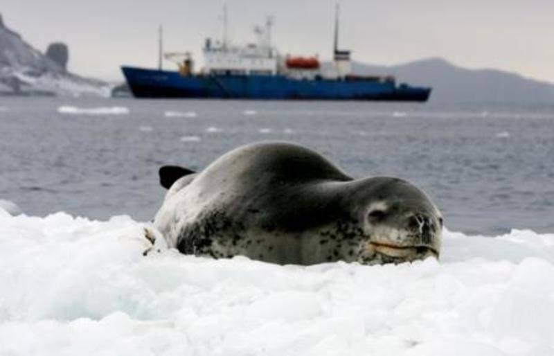 Akademic Shokalskiy, Antarctica cruise