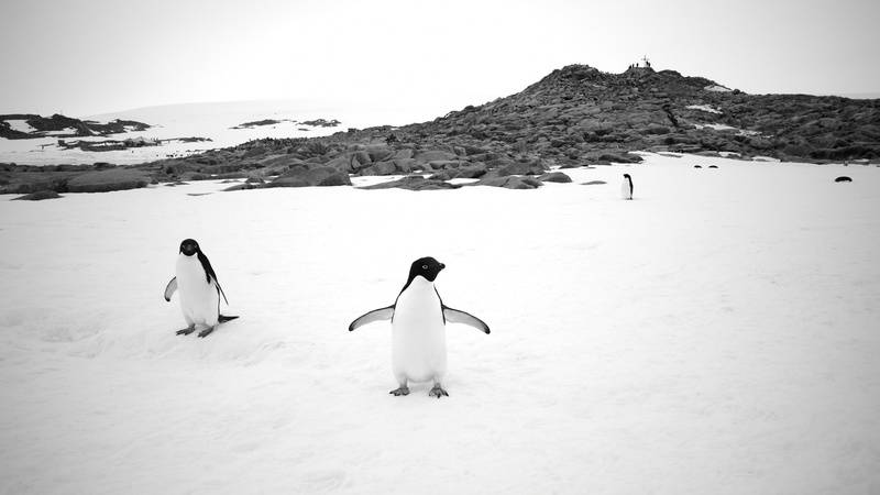 Pengins in Antarctica, Antarctica cruise from New Zealand