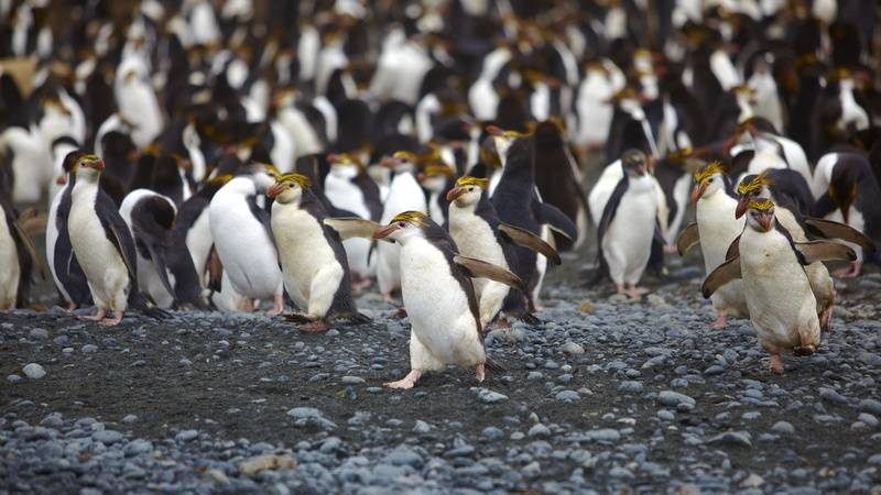 Penguins, Antarctica cruise from New Zealand