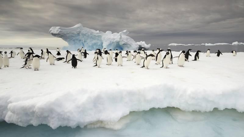 Penguins on iceberg, Antarctica cruise from New Zealand