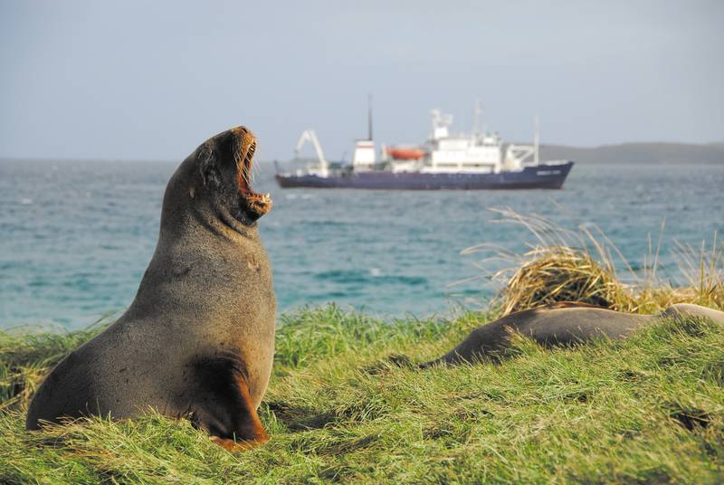 Macquarie Island excursion, Antarctica cruise from New Zealand