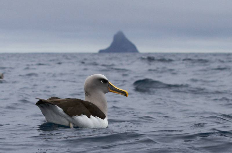 Albatross, Antarctica cruise from New Zealand