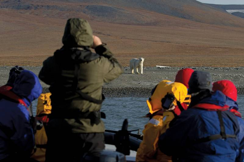 Polar bear tour, Arctic Polar bear cruise