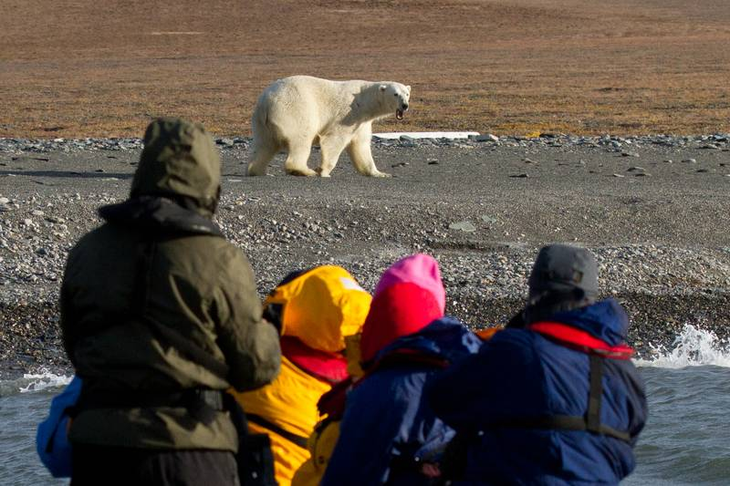 Polar bear excursion, Wrangel Island, Arctic Polar bear cruise