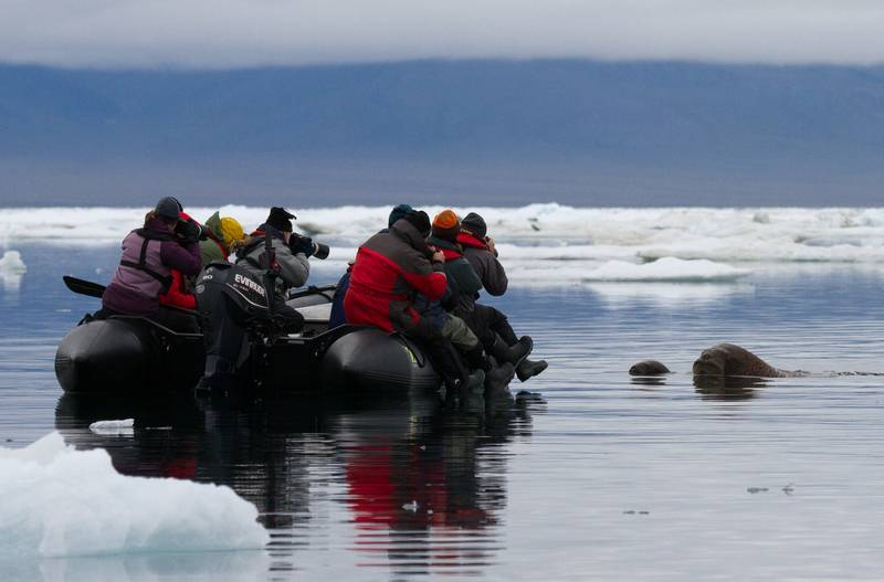 Arctic excursion, Wrangel Island, Arctic Polar bear cruise