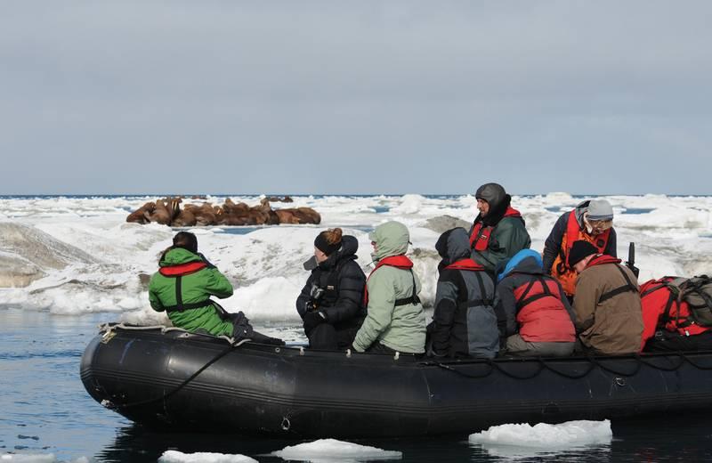 Zodiac excursions, Wrangel Island, Arctic Polar bear cruise