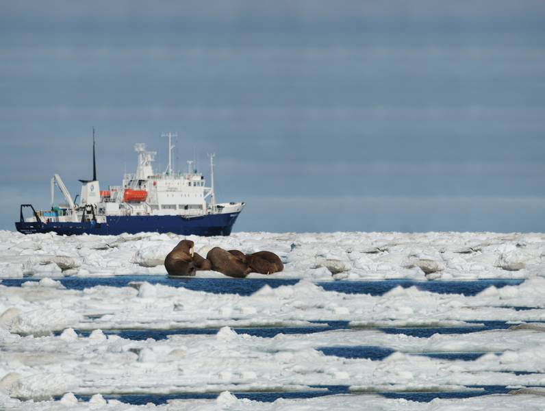 Expedition ship, Wrangel Island, Arctic Polar bear cruise