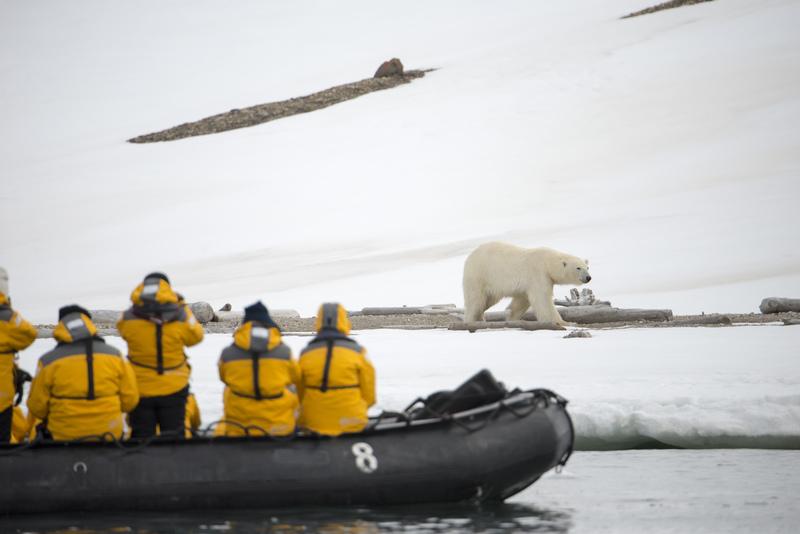 Zodiac cruise Polar bear, Spitsbergen, Polar bear cruise
