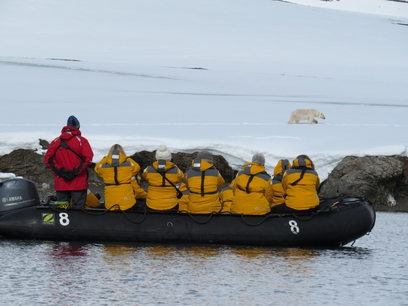 Zodiac and Polar bear, Spitsbergen, Polar bear cruise