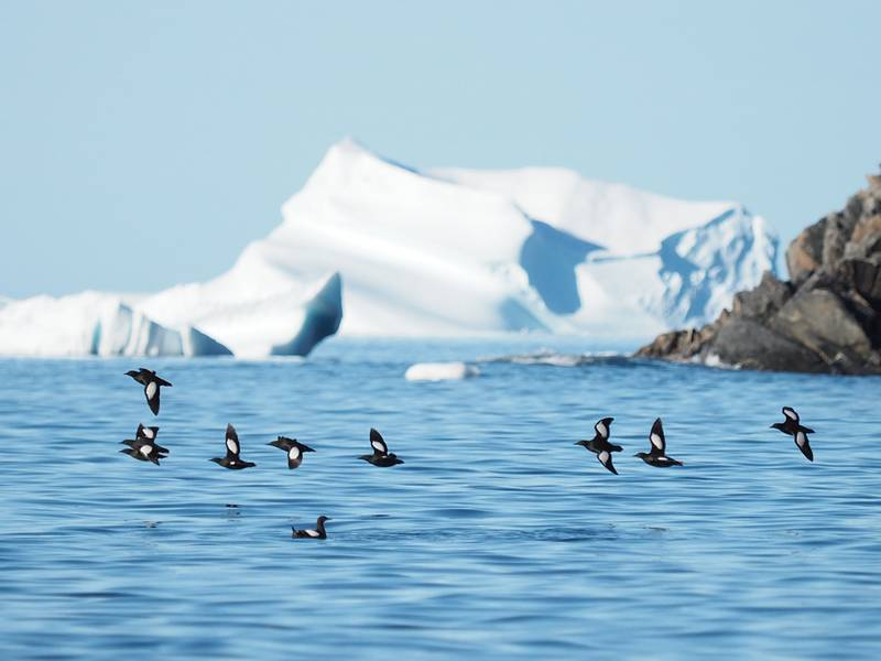 Arctic scenery, Northwest passage cruise