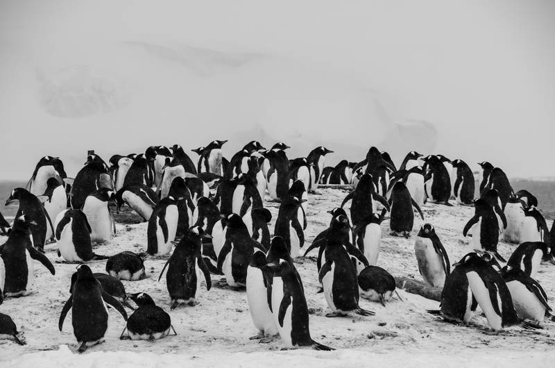 Penguins, Antarctica cruise
