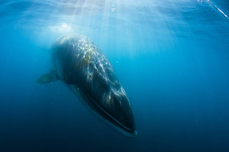 Whale, Antarctica cruise