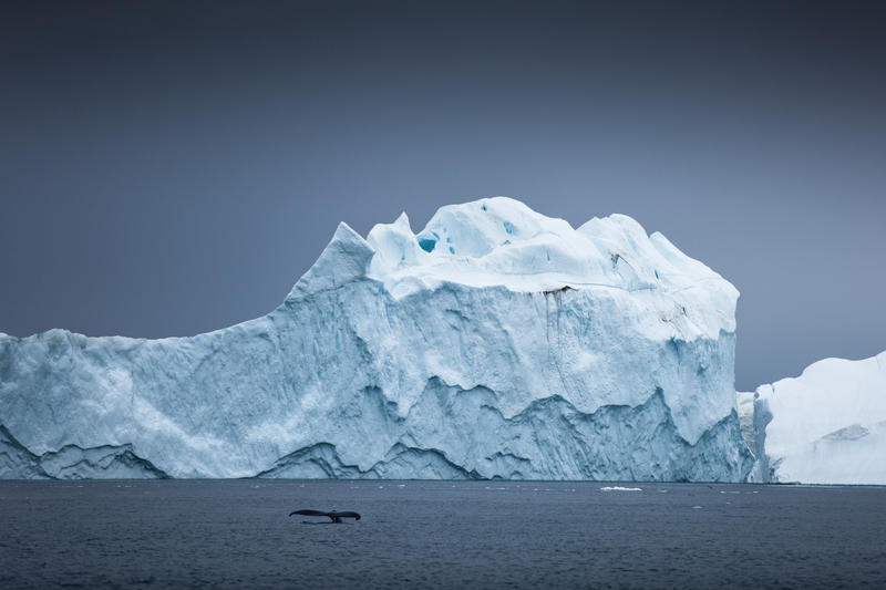 whale fluke and iceberg, cruise to greenland