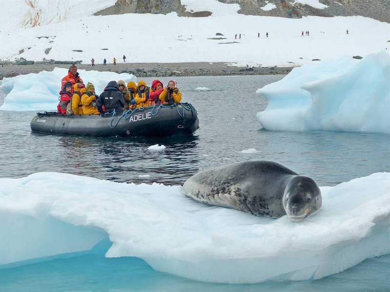 Antarctica tourists with seal, Cruise to Antarctica