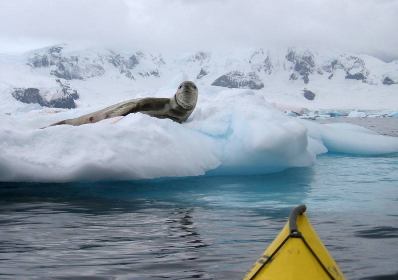 Close encounter with seal, Cruise to Antarctica