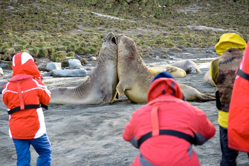 Tourists with seals, South Georgia, Cruise to Antarctica