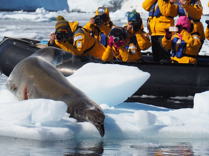 Tourists with seal in Antarctica, Cruise to Antarctica