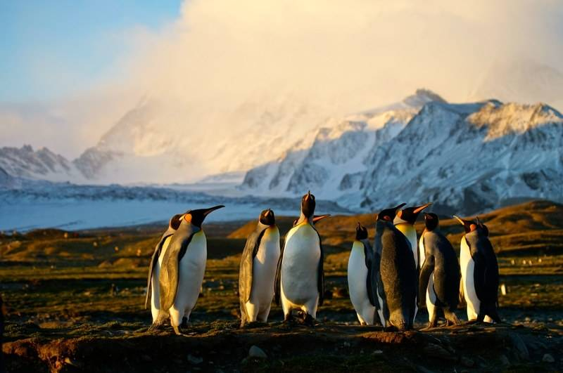 King penguins and South Georgia, Cruise to Antarctica