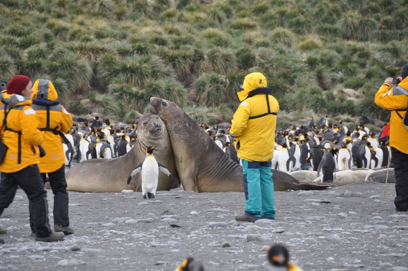 Antarctic tourists with Seals, Cruise to Antarctica
