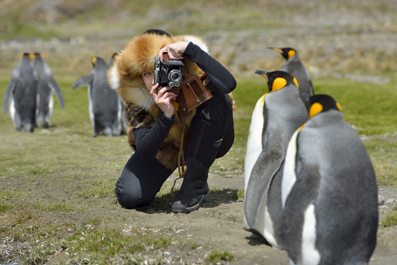 King penguins with tourists, Cruise to Antarctica