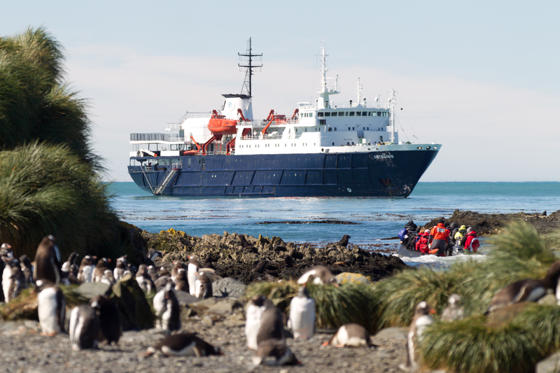 Ortelius in South Georgia, Antarctica cruise