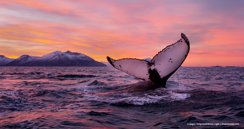 Whale fluke in the Arctic, Arctic cruise
