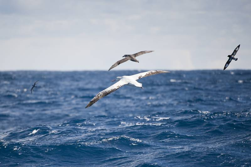Sea birds, Cruise to Antarctica