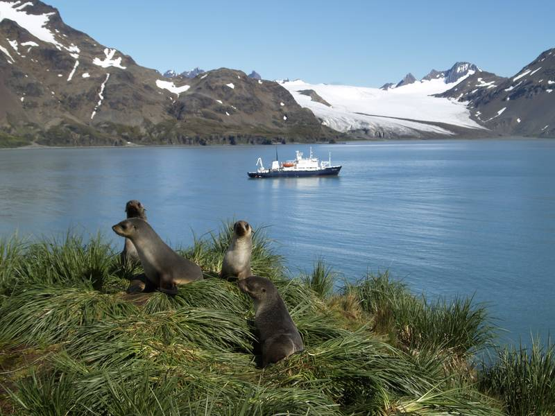 Seals in South Georgia, Antarctic cruise
