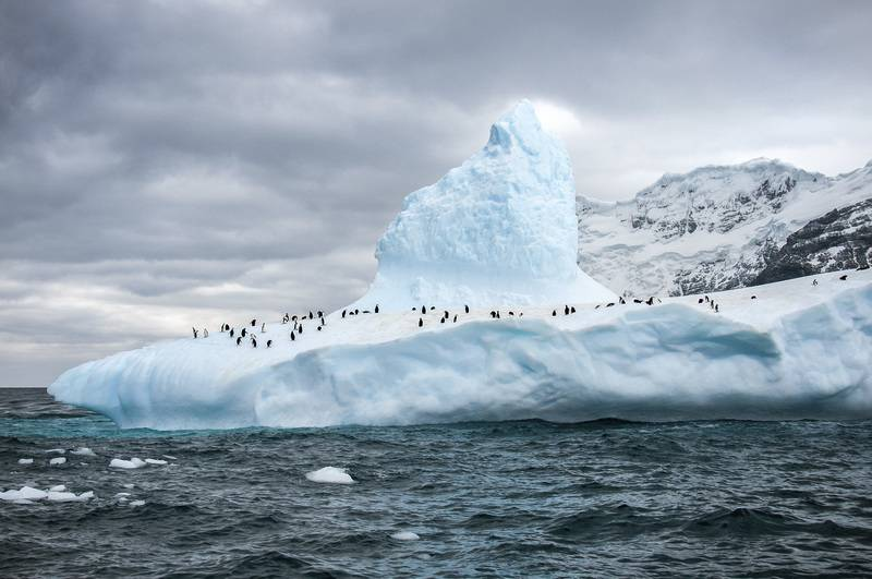 Penguins on iceberg, Antarctica cruise