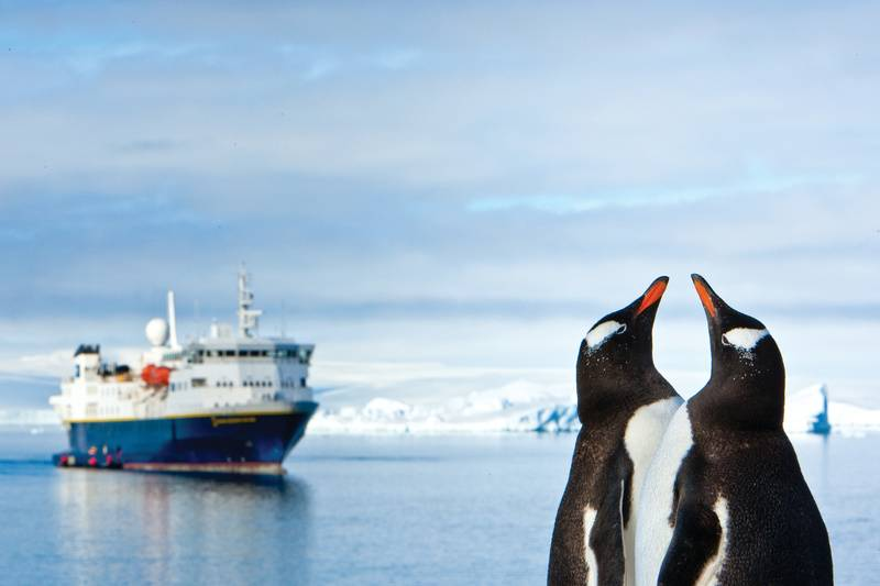 Gentoo penguins, Cruise to Antarctica