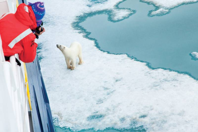 Polar bear spotting, Arctic cruise