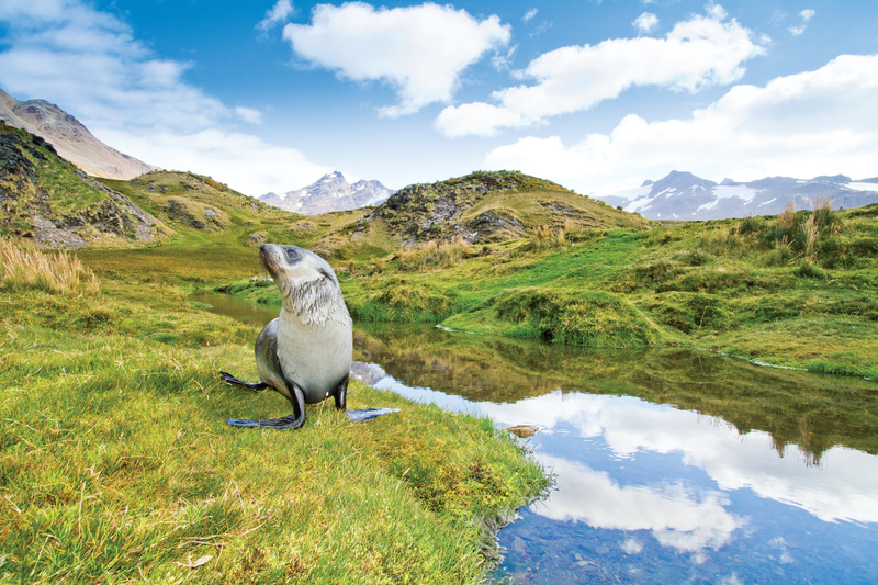Seal on South Georgia, Cruise to Antarctica