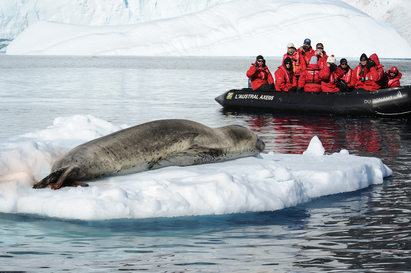 Seal in Antarctica, Cruise to Antarctica