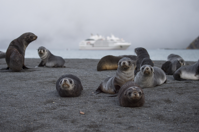 Seal pups on South Georgia, Cruise to Antarctica