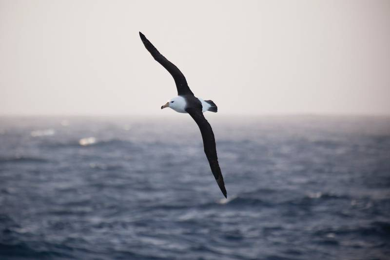 Albatross, Antarctica cruise