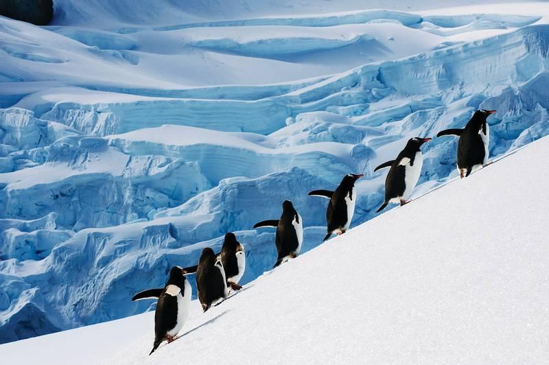 Penguins in Antarctica, Antarctica cruise
