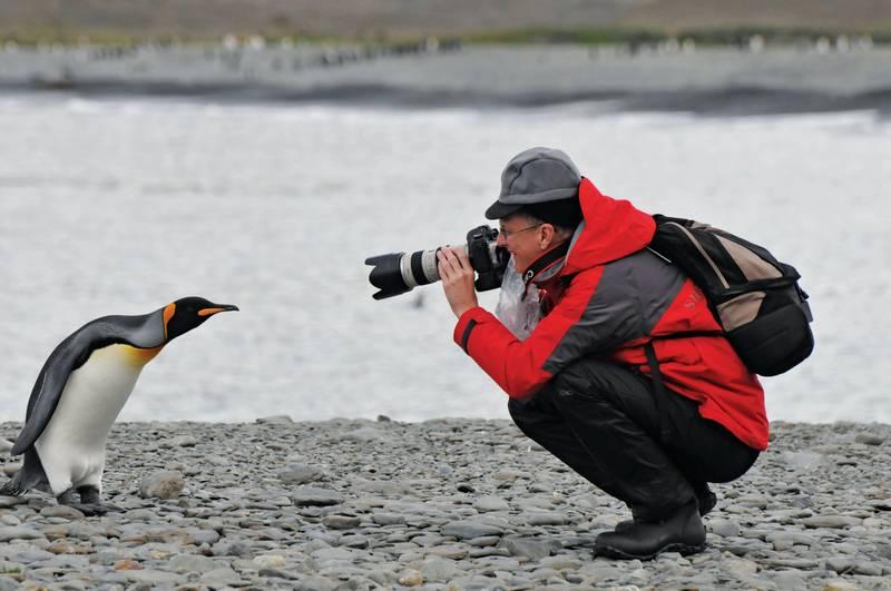 South Georgia photographer, Antarctica cruise
