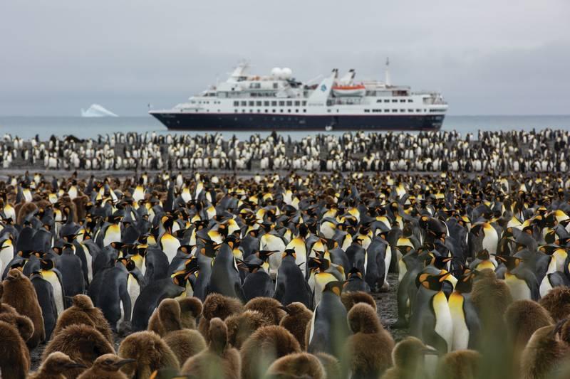 King penguins on South Georgia, Cruise to Antarctica