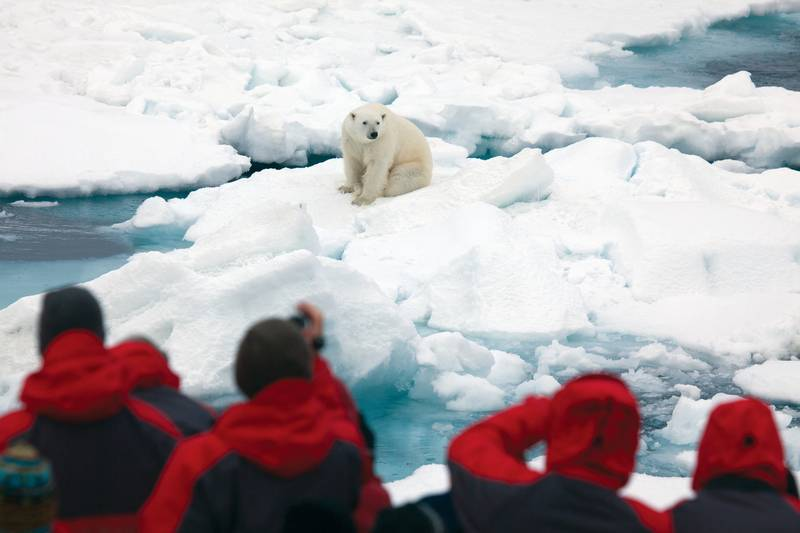 Polar bear spotting, Spitsbergen, Polar bear cruise