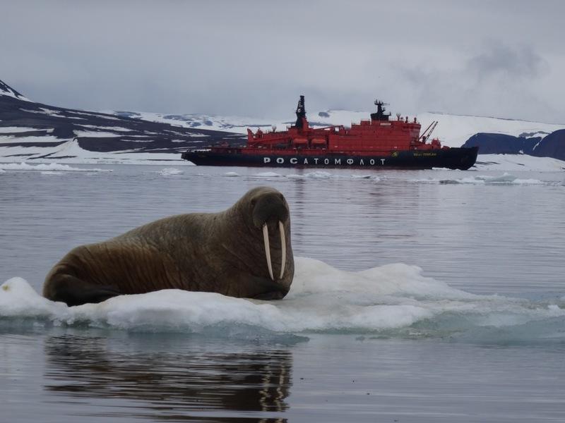 Walrus, North Pole cruise