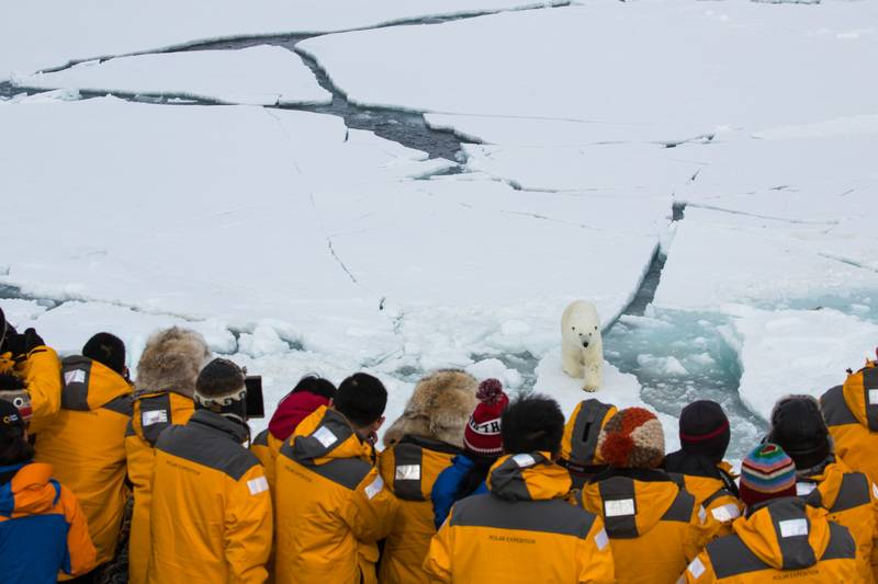 Polar bear spotting, North Pole cruise