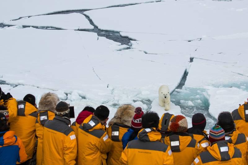 Polar bear spotting, North Pole cruise