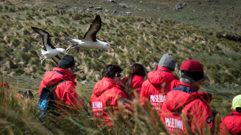 Albatross on South Georgia, Antarctica cruise