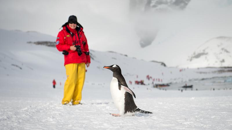 Antarctic tourists with Penguins, Cruise to Antarctica
