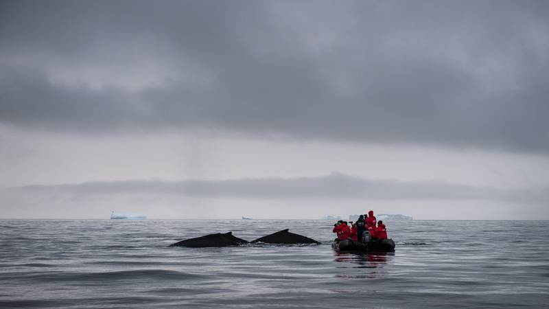 Whale watching in Antarctica, Cruise to Antarctica