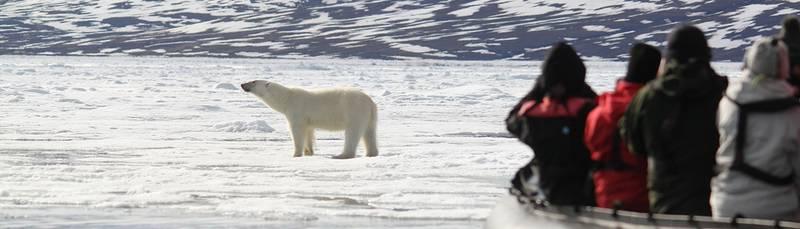 Zodiac cruise and Polar bear, Arctic cruise