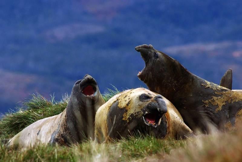 Patagonia elephant seals australis cruise