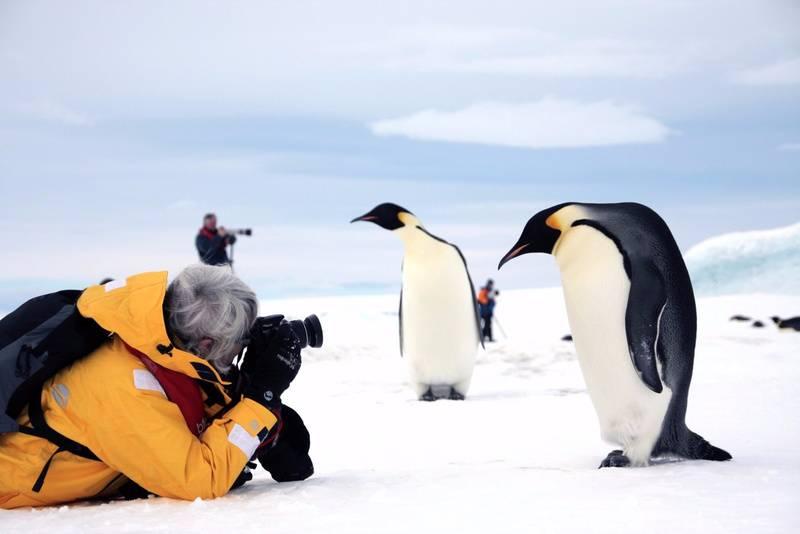 snow hill island antarctica emperor penguin